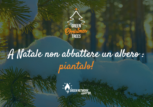 Green Christmas Trees: al via l'iniziativa di Green Network Energy dedicata al Natale!