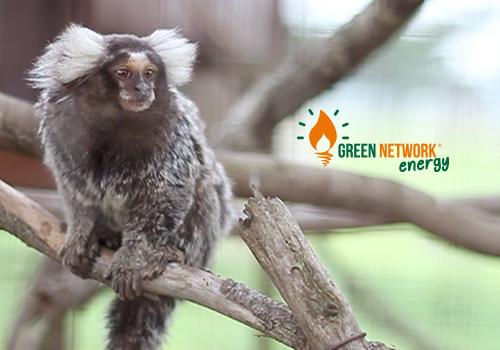 Green Network Energy sostiene la clinica veterinaria Appia Antica e il Centro di Recupero Il Nostro Regno degli Animali